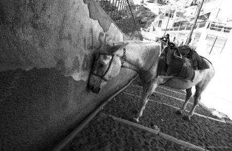 Photos of A Donkey's Life - MARK ESPER. PHOTOGRAPHER